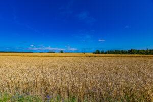 DER RÜGENMAKLER - Dranske umgeben von Feldern